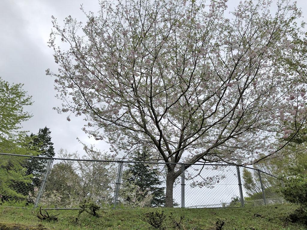 千葉県立内浦山県民の森キャンプ場